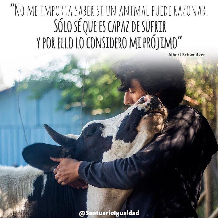 Llevemos a los animales en nuestro corazón... Nunca más en una bandeja de carne! :)