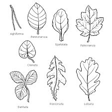 Risultati immagini per foglie da colorare e ritagliare
