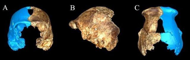 Sterrenmens uit Zuid-Afrikaanse grot kan geschiedenis van de mensheid herschrijven - http://www.ninefornews.nl/sterrenmens-uit-zuid-afrikaanse-grot-kan-geschiedenis-van-de-mensheid-herschrijven/