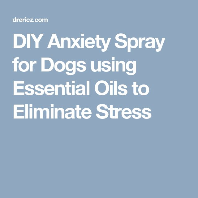 DIY Anxiety Spray for Dogs using Essential Oils to Eliminate Stress