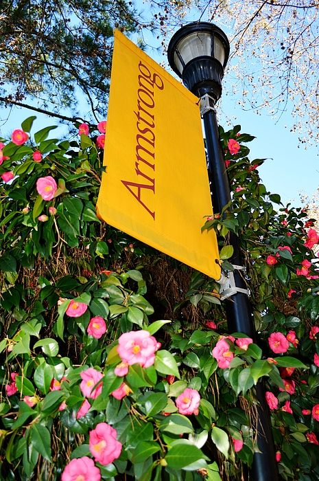 One of the many banners on the Savannah Georgia Armstrong State University campus. These camellias surround this lamp post making for a beautiful setting.