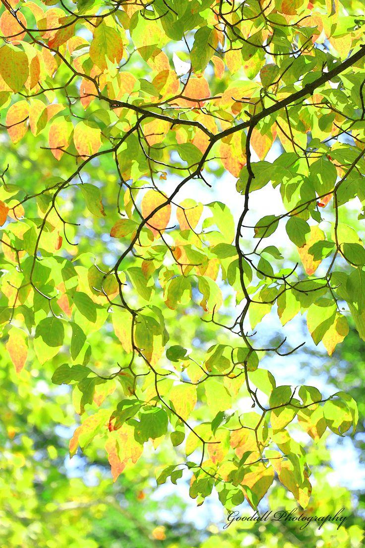 Autumn In Happy Valley / State College, Pennsylvania / September 2015 https://www.facebook.com/goodallphoto