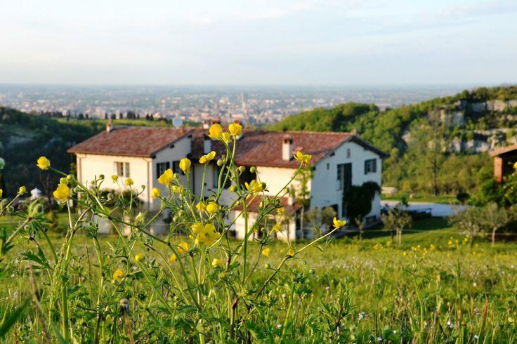 giallo # yellow # countryside # cà bianca dell'abbadessa #Bologna italy #