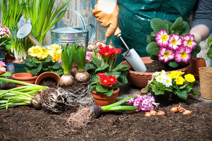 No auge do verão, as temperaturas altas são uma constante. As áreas ajardinadas, as plantas de interior e a sua horta precisam de cuidados específicos. Saiba quais
