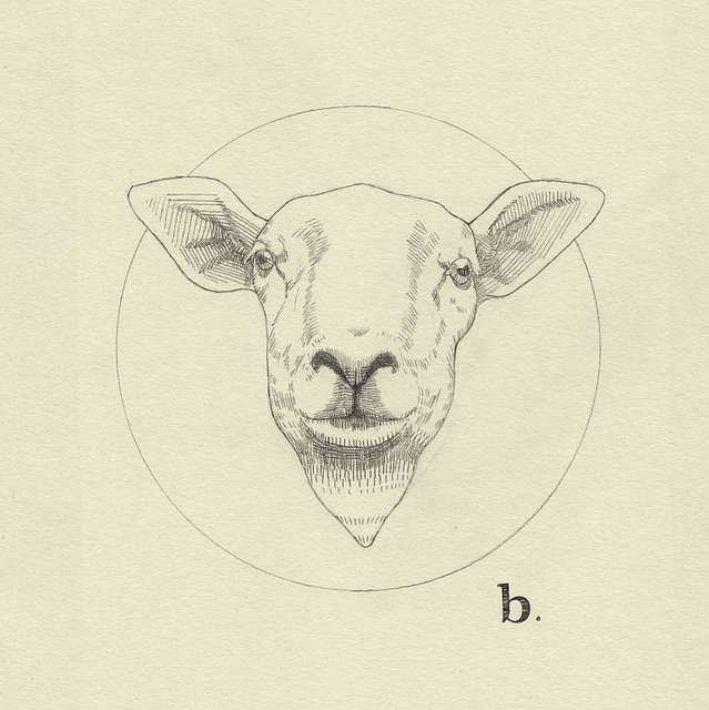 b. sheep by Peter Carrington, via Flickr
