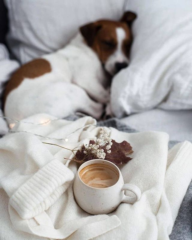 Kellemes #szombat reggelt!  #moring #chill #coffee #saturday #dog #sleepymood #ellehungary #elle via ELLE HUNGARY MAGAZINE OFFICIAL INSTAGRAM - Fashion Campaigns  Haute Couture  Advertising  Editorial Photography  Magazine Cover Designs  Supermodels  Runway Models