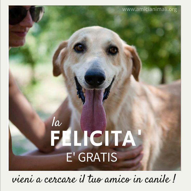 la #felicità è gratis!vieni in #canile ! altre foto> http://on.fb.me/1NM1GpZ  http://www.amicianimali.org ph@Irene Pezzella