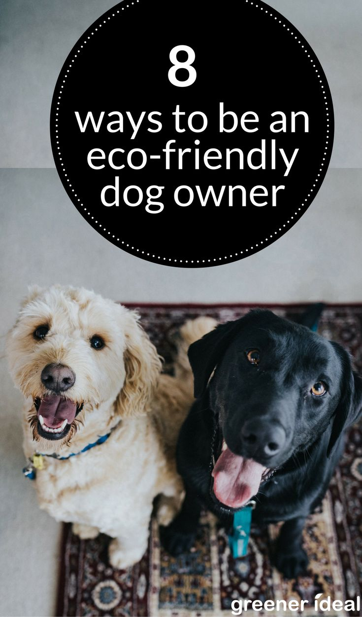 From their eating and play habits to their elimination cycles, humanity's best friend can take a serious toll on the planet. Here are 8 meaningful first steps you can take to begin greening your dog's environmental pawprint now.