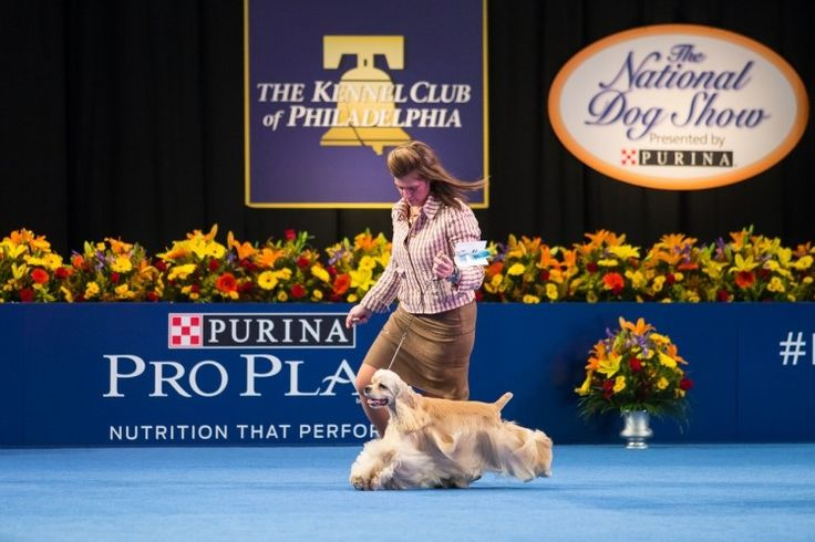 Awesome reasons you should watch The National Dog Show this year