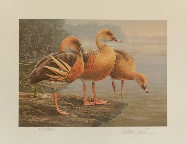 Plumed Whistling Ducks - Daniel Smith, Limited Edition 1989-90 Duck Stamp Print
