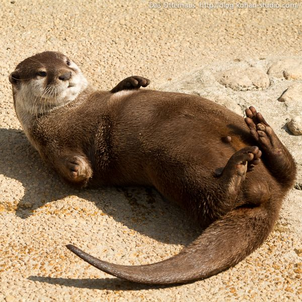 Das Otterhaus Mr. Sato is an excellent wildlife photographer.