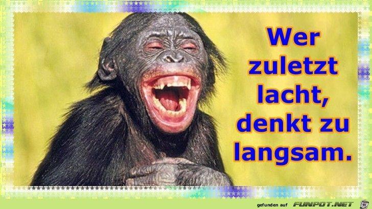 lustiges Bild 'Wer zuletzt lacht.jpg' von WienerWalzer. Eine von 61029 Dateien in der Kategorie 'Lustiges' auf FUNPOT.