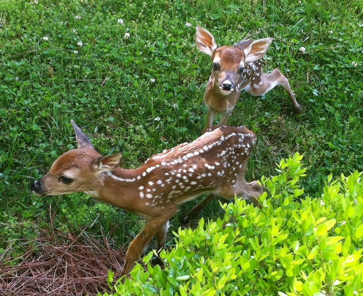 It's baby season at Berry College! Photo by Dale McConkey.
