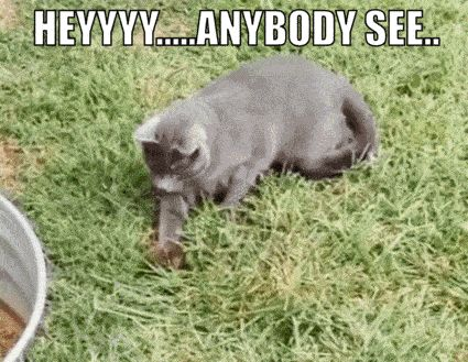19+LOL CAT MEMES/PIC TO MAKE YOU BEND OVER LAUGHING http://omgshots.com/3704-19lol-cat-memespic-to-make-you-bend-over-laughing.html