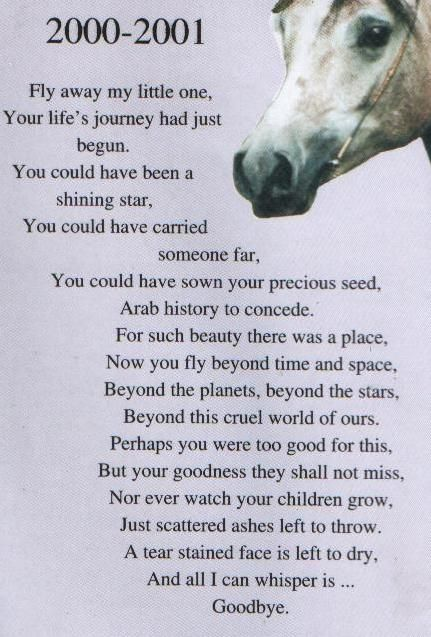 horse poems | United Kingdom