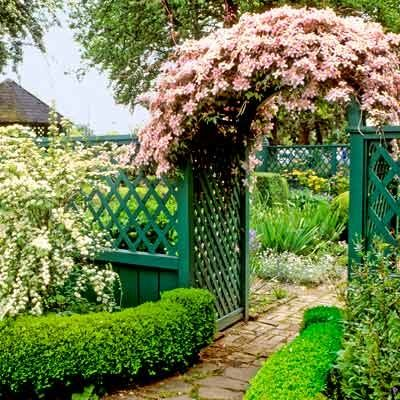 A deep green fence and arbor offer a subtle backdrop, highlighting white hawthorn blooms and pink clematis vine flowers.