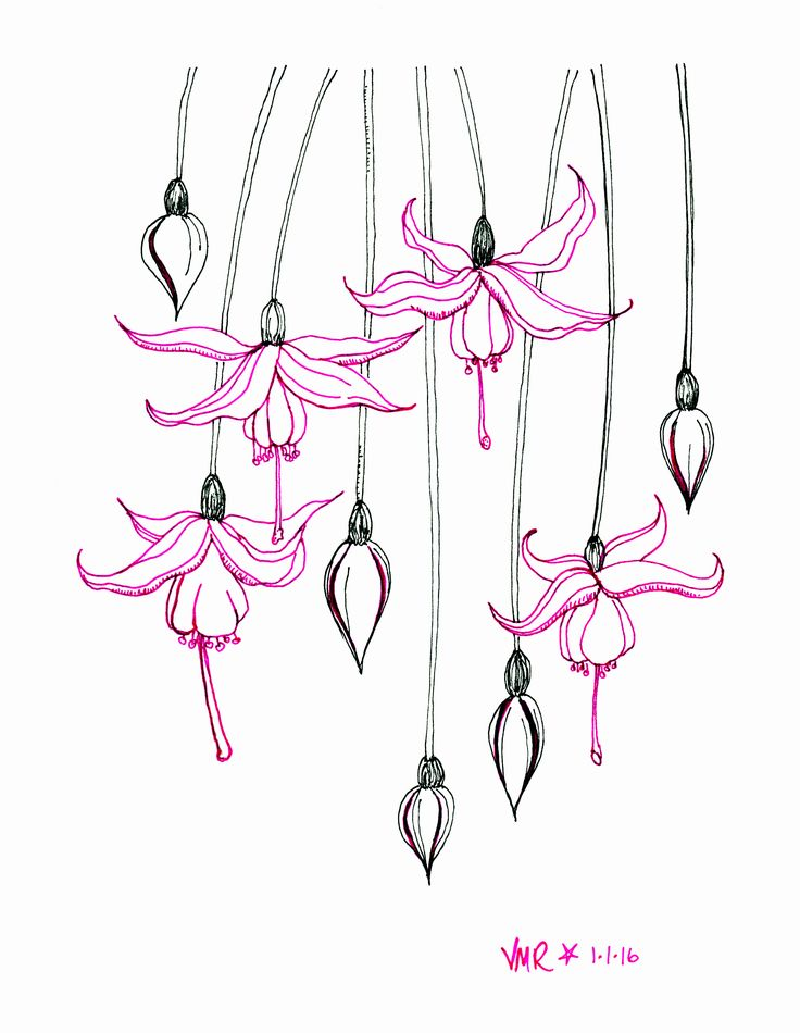 Pink Flower Line Drawing : Best ideas about simple flower drawing on pinterest