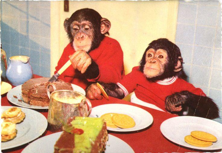 twee jonge aapjes aan t ontbijt