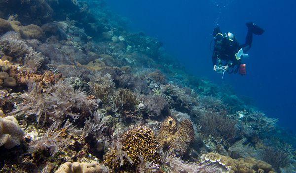 Alor, Nusa Tenggara Timur