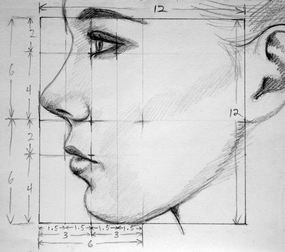 Draw facial proportions