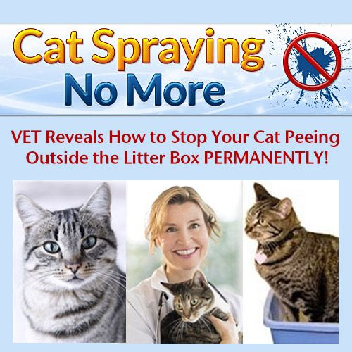 #CatSpraying  A proven system Guaranteed to stop your cat peeing outside the litter box! http://0df70ev7yccsyn41np5i151rc6.hop.clickbank.net/