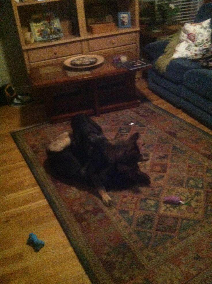 Two best buddies, Loki and Ava