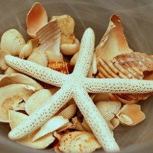ビーチ&クルーズウェディングにおすすめ!貝殻を使った海の結婚式装飾アイディア画像