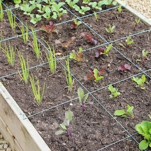 square foot garden plan for raised beds