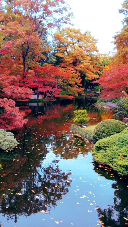 This seven acre Japanese Garden is just one lovely part of the 110 acre Fort Worth Botanic Garden in Fort Worth, Texas.  The red Japanese Maples are spectacular!