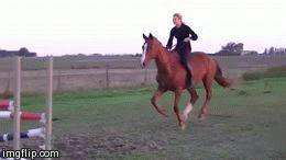 (8) horse gif | Tumblr A BROWN HORSE