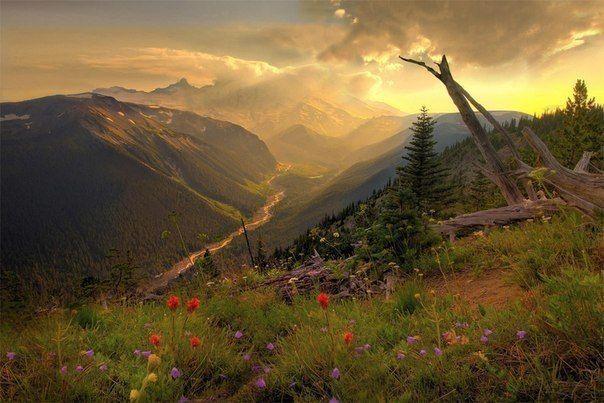 Вид в Национальном парке Маунт-Рейнир, Штат Вашингтон, США