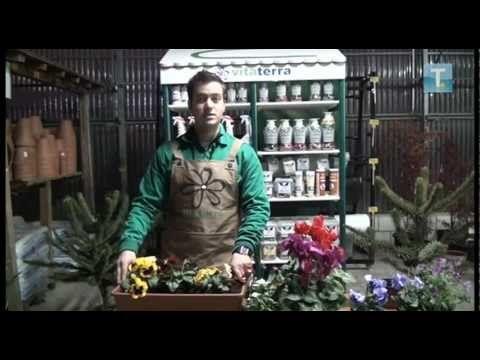 Video consejo. Plantar es sencillo con iPack universal