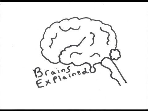 The Hippocampus and episodic memory - YouTube