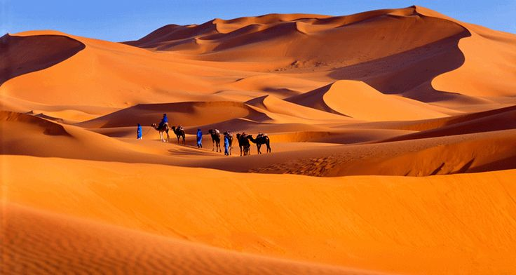 If you want to relax in an oasis after trekking the Sahara dunes, on your #SaharaDesertTour, then contact us the TIZI TREKKING. http://tizi-trekking.com/