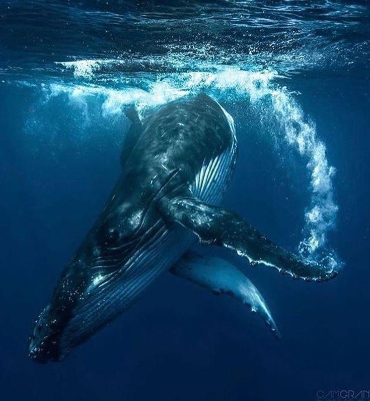 Die Schönheit des Ozeans auf Instagram: Amazing   #sealife
