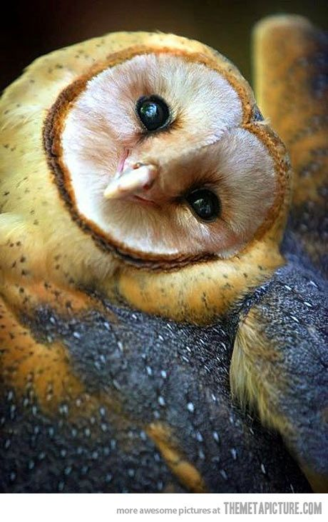 This owl is adorable.