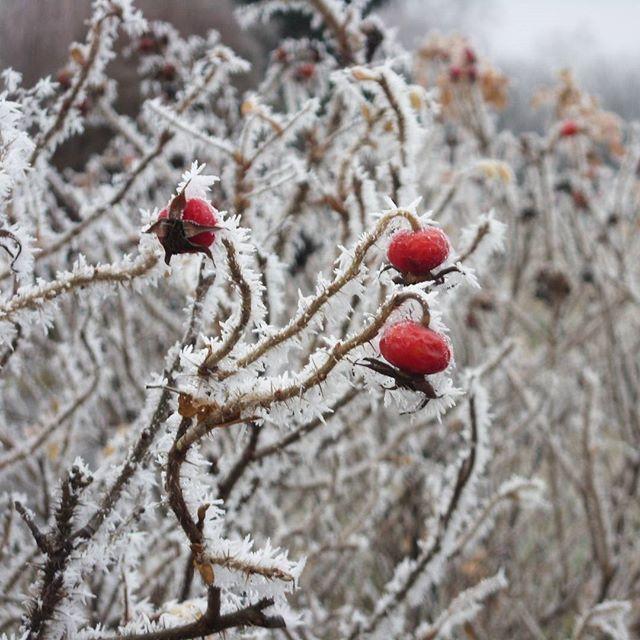 Archívum 47: 2010 december. #winter #memories #red #freeze #balaton #momentsinbalaton #memories