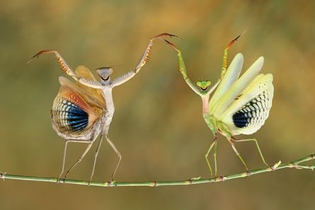 These photos of animals and nature are beautifully inspiring.