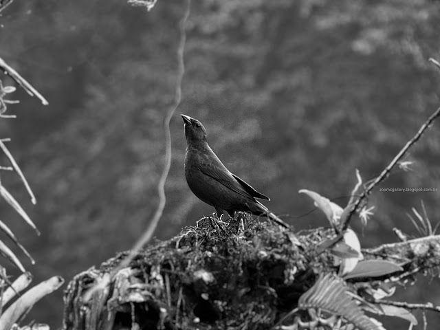 Zoom Gallery: Pássaro em Monocromia