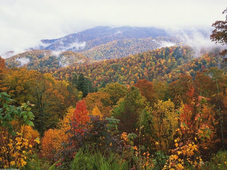 appalachian mountains | Lush_Landscape,_Appalachian_Mountains,_North_Carolina.jpg