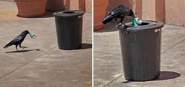 recycling raven