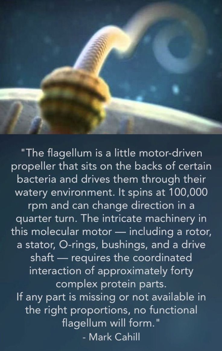Flagellum - Far too intricately engineered to be the result of random chance.