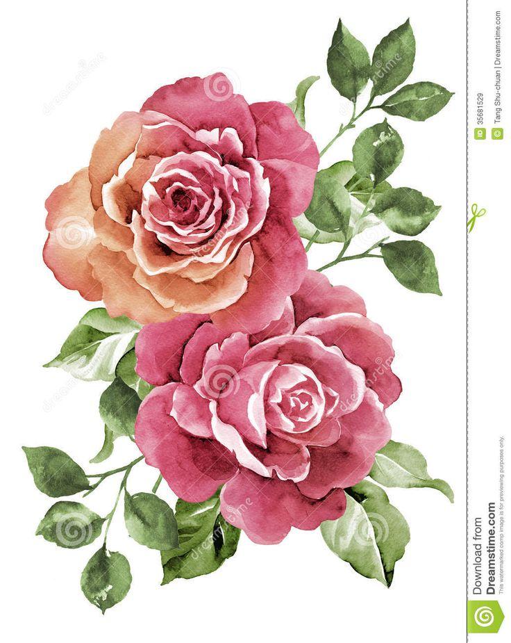 Fiore dell illustrazione dell acquerello