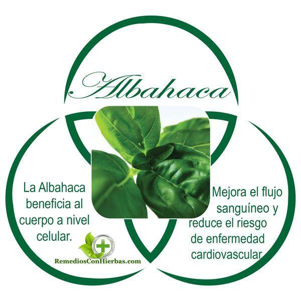 Albahaca planta medicinal yahoo dating