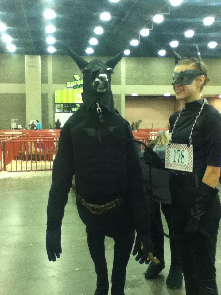 Hahaha llama in a batman costume | Llama? | Pinterest ...