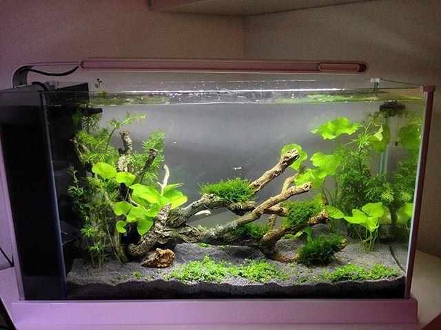 Mangrove style tank