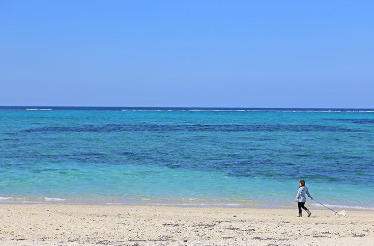 도쿄 동경 -東京 憧憬- :: 에메랄드 그린 빛 오키나와의 바닷가, 후차쿠 비치(冨着ビーチ)    좋다...보기만해도 조으다...ㅋ