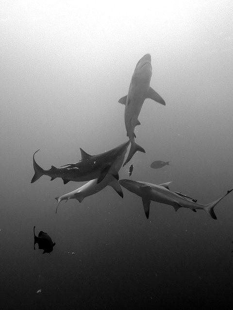 Sharks, don't eat or kill them. We need them