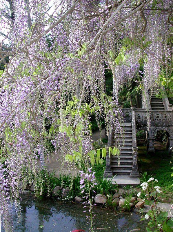 PARQUE DE MONSERRATE, Sintra, Portugal. http://www.parquesdesintra.pt/en/index.php   Photo: Parques de Sintra @ Facebook. https://www.facebook.com/photo.php?fbid=10151094513370947=a.103432495946.102211.102621685946=3