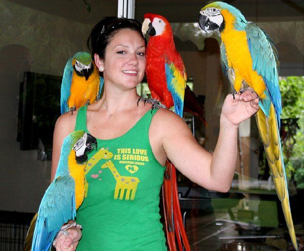 Pair of Blue and Gold macaw parrots for rehoming  We have beautiful pair of blue and gold macaw parrots for re-homing. They will be a perfect match birds in your family as they sing, talks and are quick learner